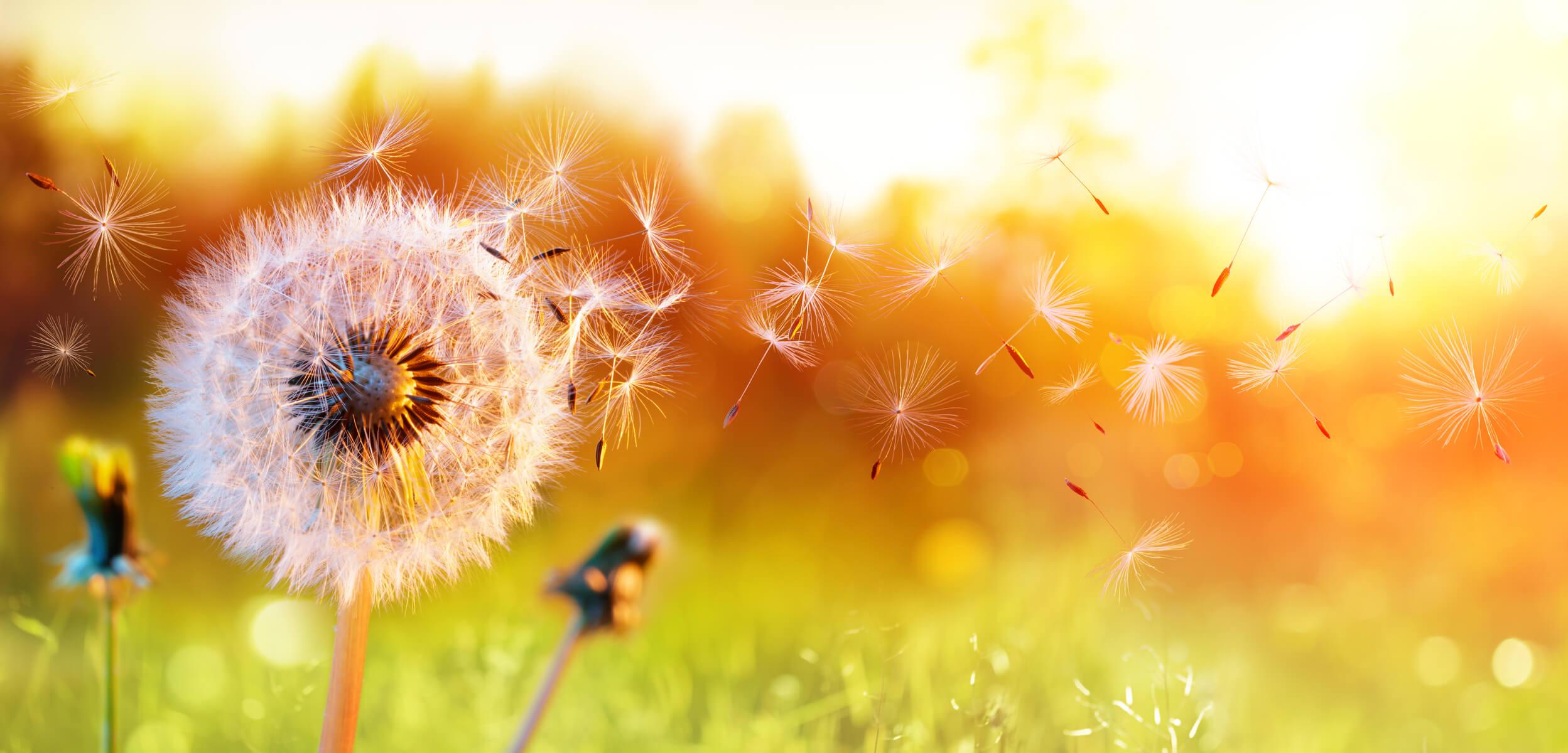 traitement naturel allergie